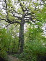 Bois de Bernouille