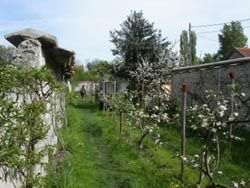 Peaches plantation << Les Murs à Peches >>