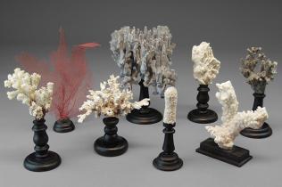Corals stand Memento Mori