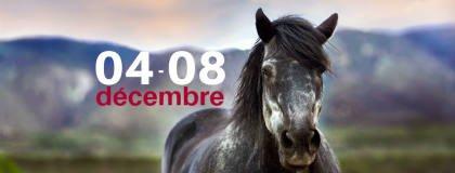 salon du cheval 2019 Paris Nord Villepinte - aff provisoire