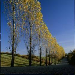Sausset Park