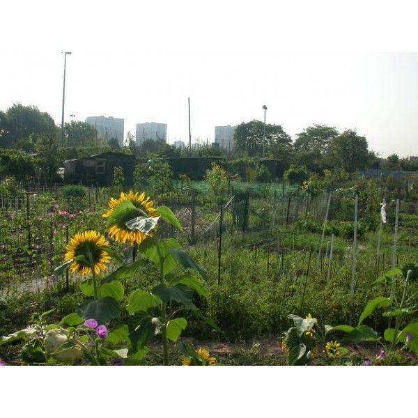 Saint denis et ses jardins ouvriers seine saint denis tourisme - Jardin potager bio saint denis ...