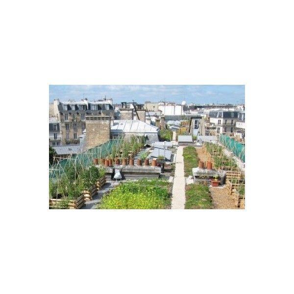 Un jardin potager sur les toits de paris seine saint denis tourisme - Jardin potager bio saint denis ...