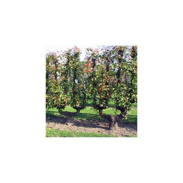 Le jardin cole de la soci t r gionale d horticulture de montreuil seine saint denis tourisme - Ikea pour le jardin montreuil ...