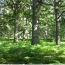 La gestion durable de la forêt de Bondy
