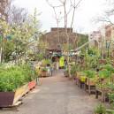 Les jardins partagés du XVIIIeme arrondissement