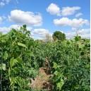 Atelier Vignes et dégustation de vin naturel dans les anciens vergers de la Plaine des vertus
