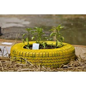 Atelier de jardinage urbain à La Prairie du Canal