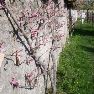 Sur les traces des murs à pêches de Montreuil